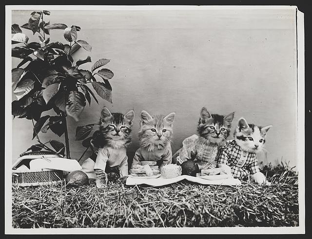 Katzen beim Frühstück!